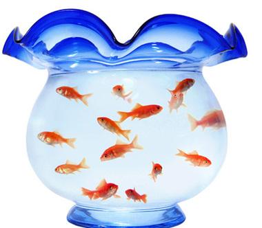 Goldfish_beizjp_s010101