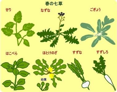 Nanakusa1